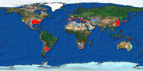 Figure 6: Areas where Sudden Oak Death is adapted to the climate and native plants are shown in bright red