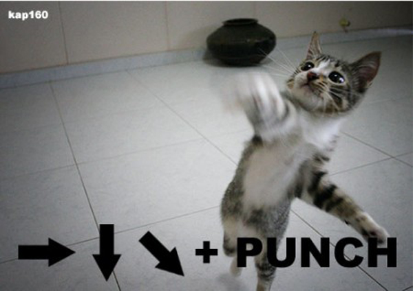 LOLCats with gaming references were particularly prized by the MemeGeeks