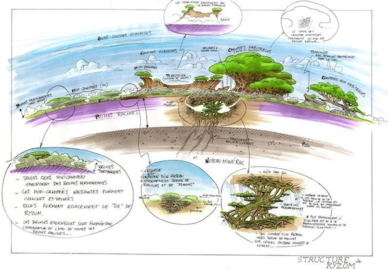 The layered ecology of Atys